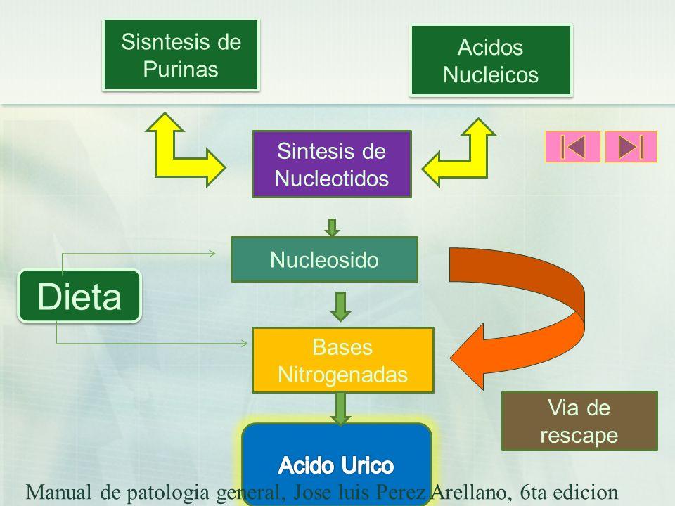 Sisntesis de Purinas Acidos Nucleicos Sintesis de Nucleotidos Nucleosido Dieta Bases Nitrogenadas Via de rescape Manual de patologia general, Jose lui