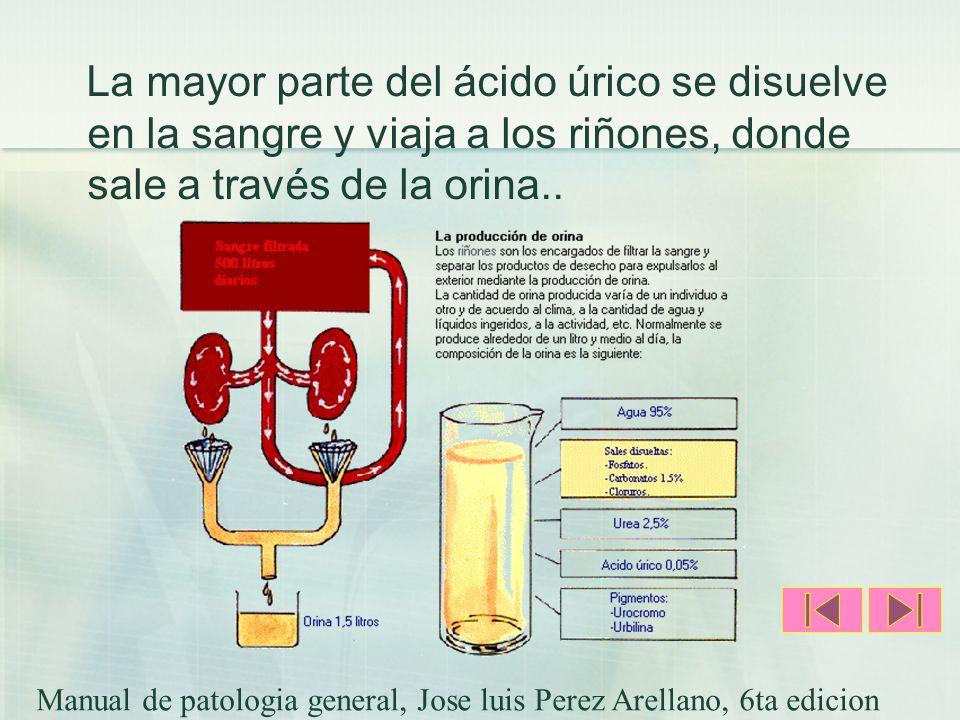 La mayor parte del ácido úrico se disuelve en la sangre y viaja a los riñones, donde sale a través de la orina.. Manual de patologia general, Jose lui