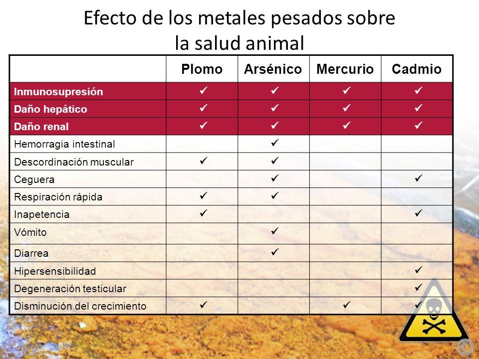 Efecto de los metales pesados sobre la salud animal PlomoArsénicoMercurioCadmio Inmunosupresión Daño hepático Daño renal Hemorragia intestinal Descord