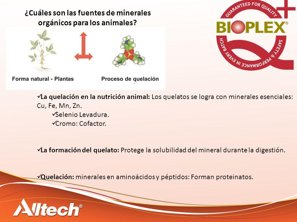 ¿Cuáles son las fuentes de minerales orgánicos para los animales.