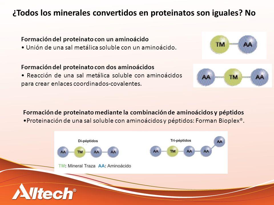 ¿Todos los minerales convertidos en proteinatos son iguales? No Formación del proteinato con un aminoácido Unión de una sal metálica soluble con un am