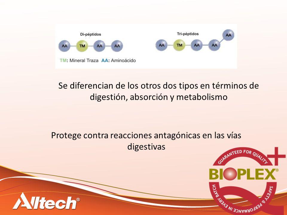 Se diferencian de los otros dos tipos en términos de digestión, absorción y metabolismo Protege contra reacciones antagónicas en las vías digestivas