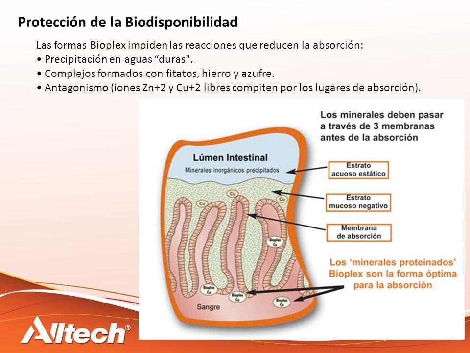 Protección de la Biodisponibilidad Las formas Bioplex impiden las reacciones que reducen la absorción: Precipitación en aguas duras