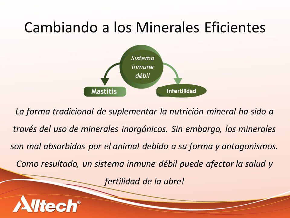 Cambiando a los Minerales Eficientes La forma tradicional de suplementar la nutrición mineral ha sido a través del uso de minerales inorgánicos.