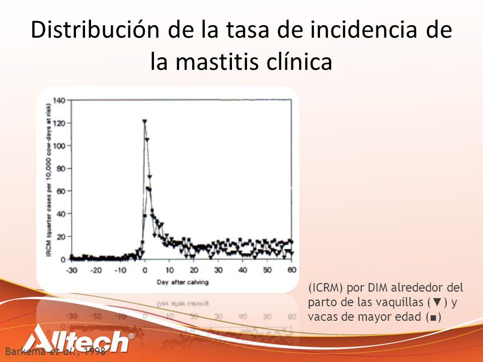 (ICRM) por DIM alrededor del parto de las vaquillas ( ) y vacas de mayor edad ( ) Distribución de la tasa de incidencia de la mastitis clínica Barkema et al., 1998