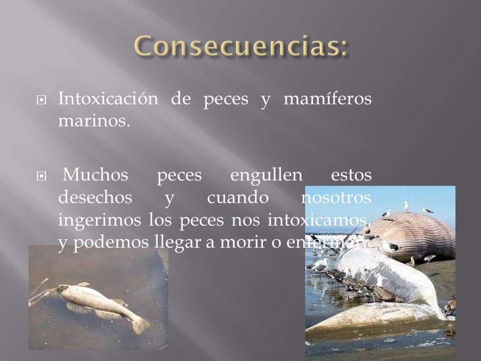 Intoxicación de peces y mamíferos marinos. Muchos peces engullen estos desechos y cuando nosotros ingerimos los peces nos intoxicamos, y podemos llega