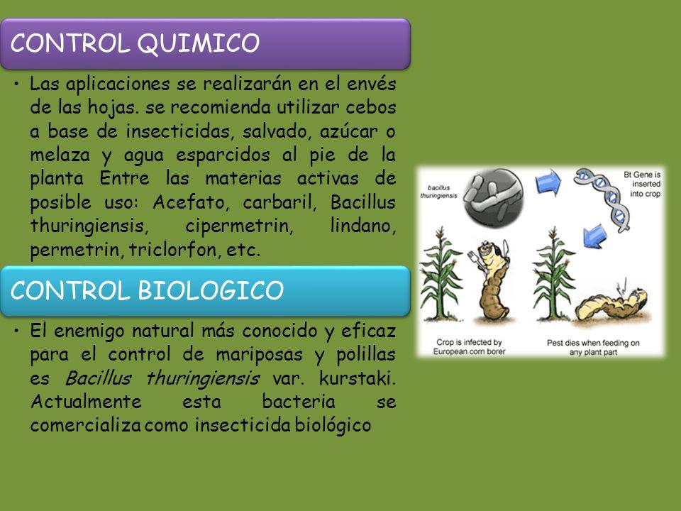 CONTROL QUIMICO Las aplicaciones se realizarán en el envés de las hojas.