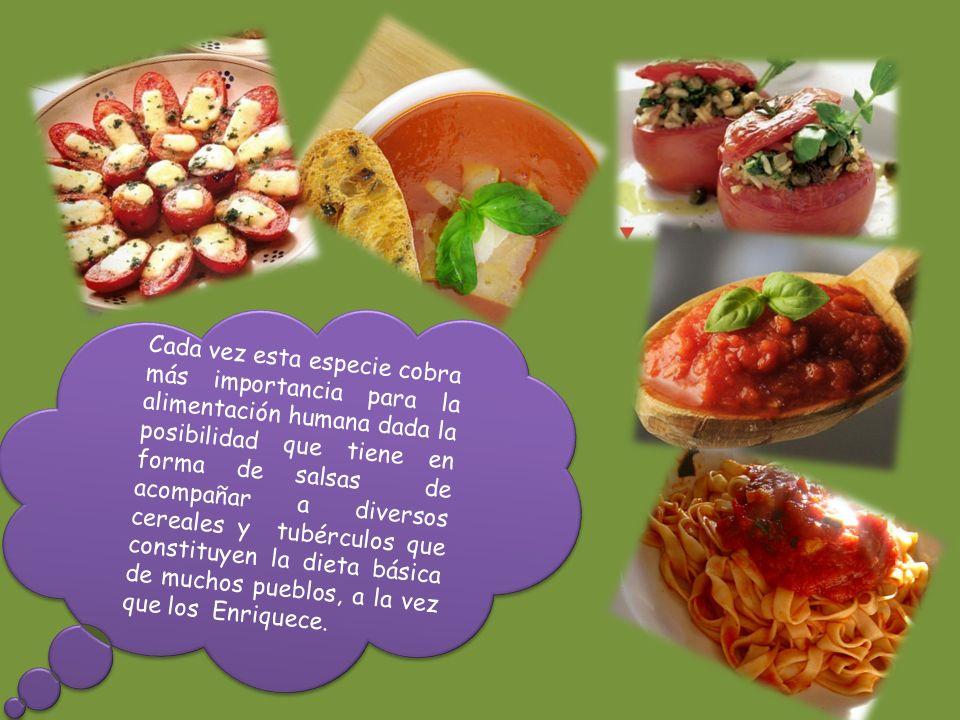 http://www.porquebiotecnologia.com.ar/ed ucacion/cuaderno/ec_93.asp?cuaderno=93 http://www.quiminet.com/ar8/ar_advchgsA bcBu-el-cultivo-del-tomate.htm http://www.cubavibra.es/admin/viewPDF.ph p?PDF=/documentos/agricultores/Manual_par a_tomates.pdf http://www.bayercropscience.es/BCSWeb/w ww/BCS_ES_Internet.nsf/id/ES_Heliothis_armi gera http://pdcvaladares.blogaliza.org/ http://www.corazonverdecr.com/boletines/b oletin05.htm