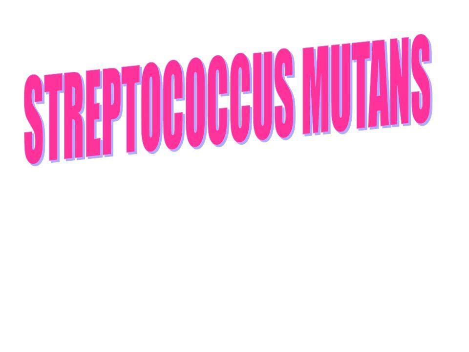 INTRODUCCION El grupo streptococcus mutans, ha sido descrito recientemente como un constituyente de la flora bacteriana oral del hombre desde hace miles de años.