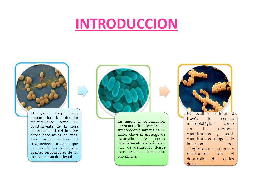 Factores de virulencia Producción de dextranasa: además de movilizar reservas de energía, esta enzima puede regular la actividad de las glucosiltranferasas removiendo productos finales de glucano.