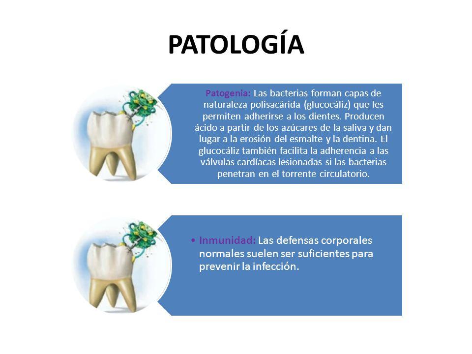 Forma de acción: factores de virulencia Acidogenicidad: S.