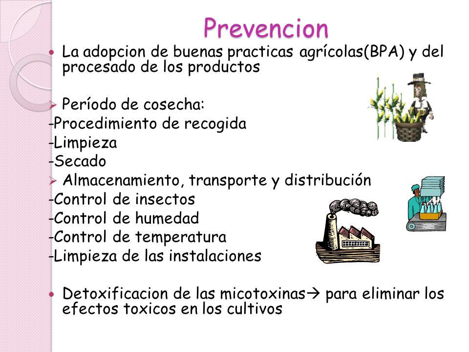 Prevencion La adopcion de buenas practicas agrícolas(BPA) y del procesado de los productos Período de cosecha: -Procedimiento de recogida -Limpieza -S