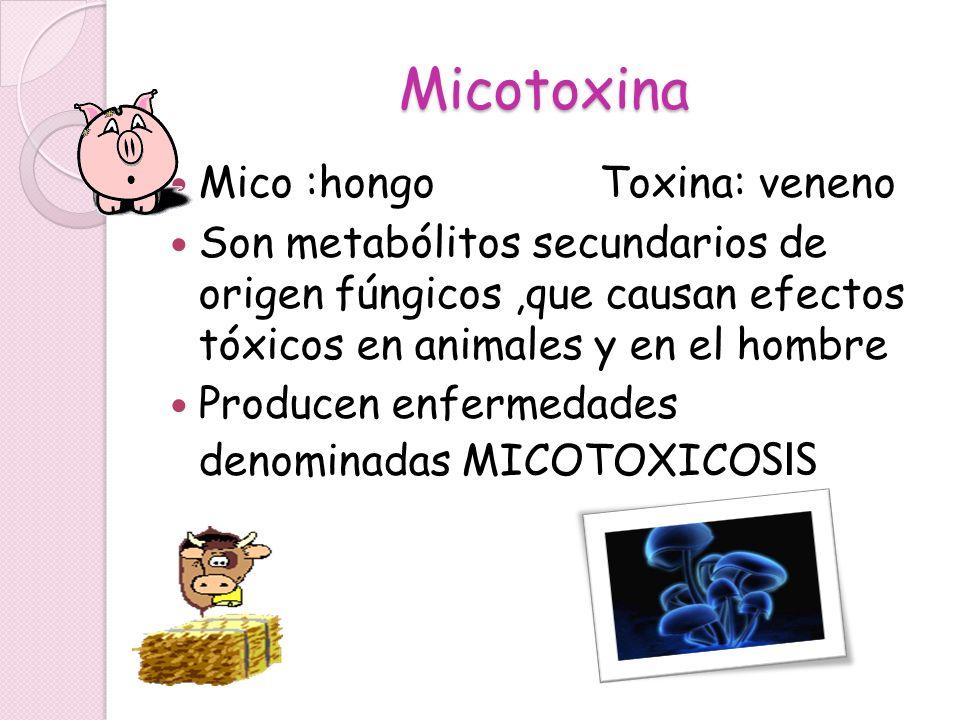 Micotoxina Mico :hongo Toxina: veneno Son metabólitos secundarios de origen fúngicos,que causan efectos tóxicos en animales y en el hombre Producen en