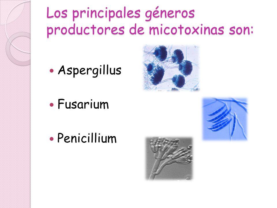 Los principales géneros productores de micotoxinas son: Aspergillus Fusarium Penicillium