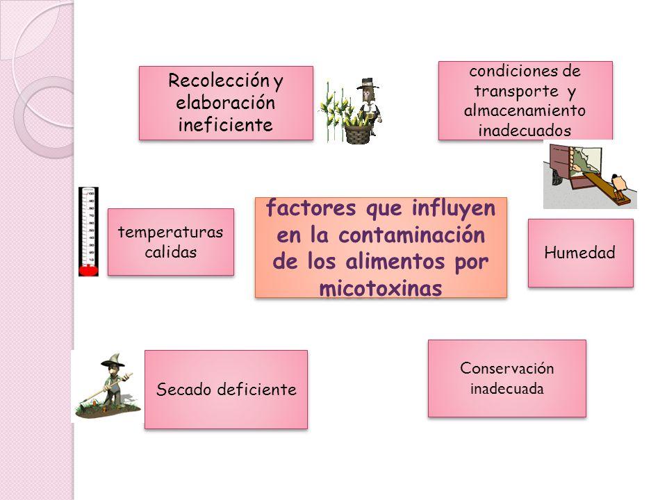 factores que influyen en la contaminación de los alimentos por micotoxinas condiciones de transporte y almacenamiento inadecuados temperaturas calidas