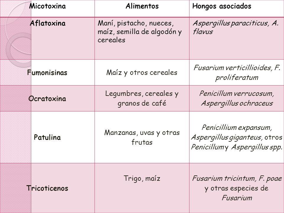MicotoxinaAlimentosHongos asociados AflatoxinaManí, pistacho, nueces, maíz, semilla de algodón y cereales Aspergillus paraciticus, A. flavus Fumonisin