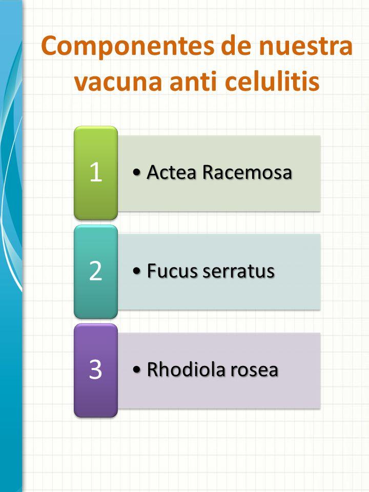 Actea RacemosaActea Racemosa 1 Fucus serratusFucus serratus 2 Rhodiola roseaRhodiola rosea 3 Componentes de nuestra vacuna anti celulitis