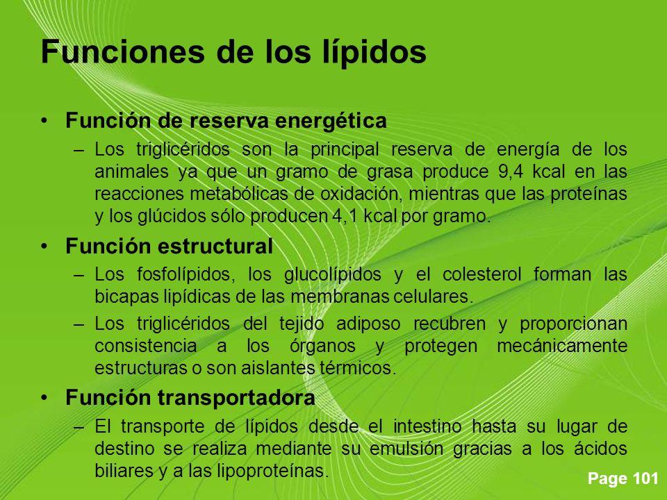 Page 101 Funciones de los lípidos Función de reserva energética –Los triglicéridos son la principal reserva de energía de los animales ya que un gramo