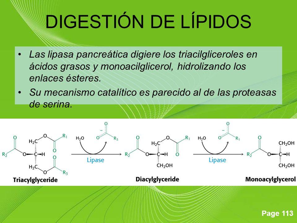 Page 113 Las lipasa pancreática digiere los triacilgliceroles en ácidos grasos y monoacilglicerol, hidrolizando los enlaces ésteres. Su mecanismo cata