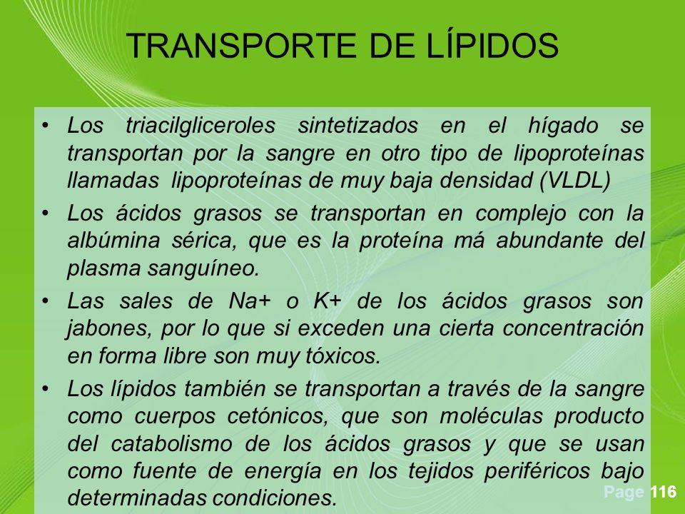 Page 116 Los triacilgliceroles sintetizados en el hígado se transportan por la sangre en otro tipo de lipoproteínas llamadas lipoproteínas de muy baja densidad (VLDL) Los ácidos grasos se transportan en complejo con la albúmina sérica, que es la proteína má abundante del plasma sanguíneo.