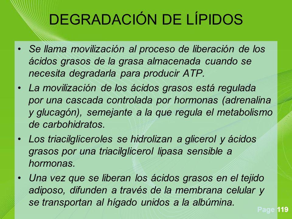 Page 119 Se llama movilización al proceso de liberación de los ácidos grasos de la grasa almacenada cuando se necesita degradarla para producir ATP.