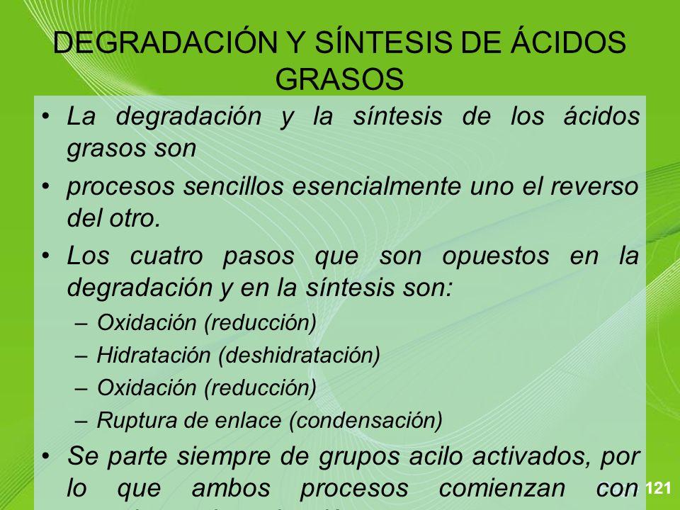 Page 121 La degradación y la síntesis de los ácidos grasos son procesos sencillos esencialmente uno el reverso del otro. Los cuatro pasos que son opue