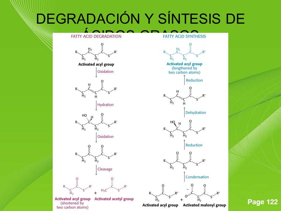 Page 122 DEGRADACIÓN Y SÍNTESIS DE ÁCIDOS GRASOS