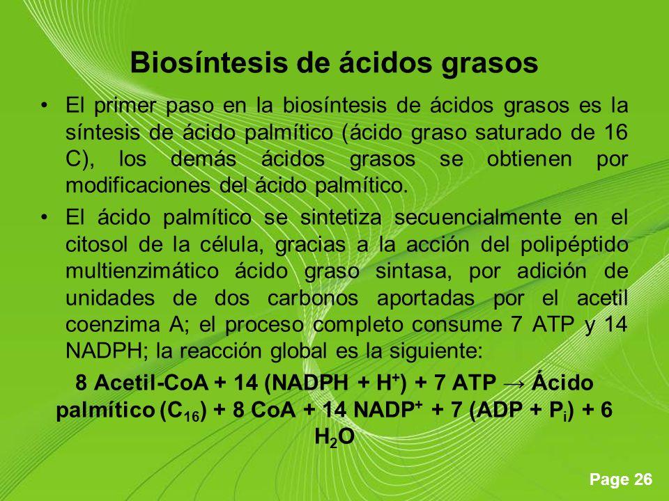 Page 26 Biosíntesis de ácidos grasos El primer paso en la biosíntesis de ácidos grasos es la síntesis de ácido palmítico (ácido graso saturado de 16 C), los demás ácidos grasos se obtienen por modificaciones del ácido palmítico.