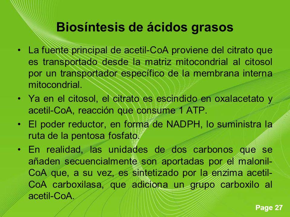 Page 27 Biosíntesis de ácidos grasos La fuente principal de acetil-CoA proviene del citrato que es transportado desde la matriz mitocondrial al citosol por un transportador específico de la membrana interna mitocondrial.