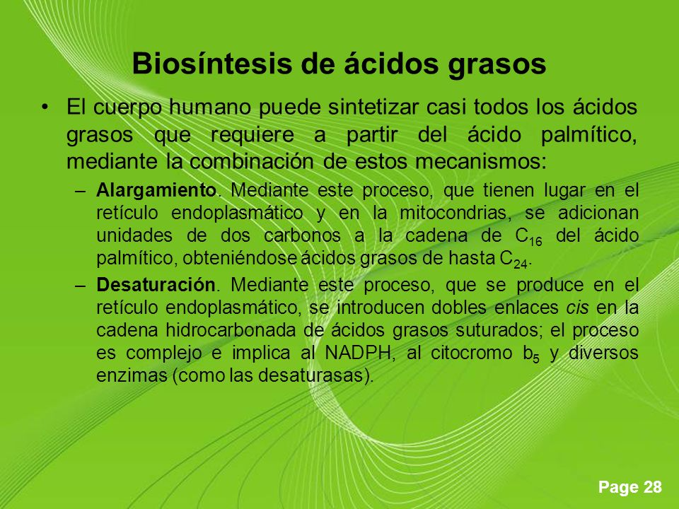 Page 28 Biosíntesis de ácidos grasos El cuerpo humano puede sintetizar casi todos los ácidos grasos que requiere a partir del ácido palmítico, mediante la combinación de estos mecanismos: –Alargamiento.