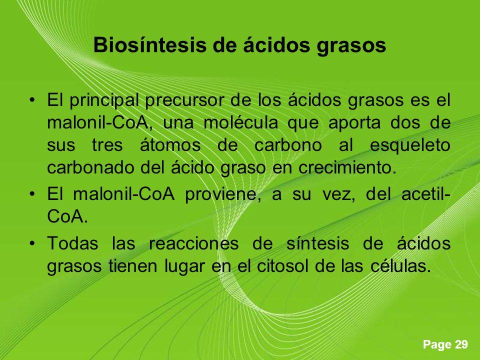 Page 29 Biosíntesis de ácidos grasos El principal precursor de los ácidos grasos es el malonil-CoA, una molécula que aporta dos de sus tres átomos de carbono al esqueleto carbonado del ácido graso en crecimiento.