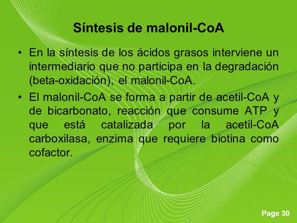 Page 30 Síntesis de malonil-CoA En la síntesis de los ácidos grasos interviene un intermediario que no participa en la degradación (beta-oxidación), e