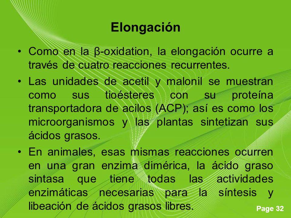 Page 32 Elongación Como en la β-oxidation, la elongación ocurre a través de cuatro reacciones recurrentes. Las unidades de acetil y malonil se muestra