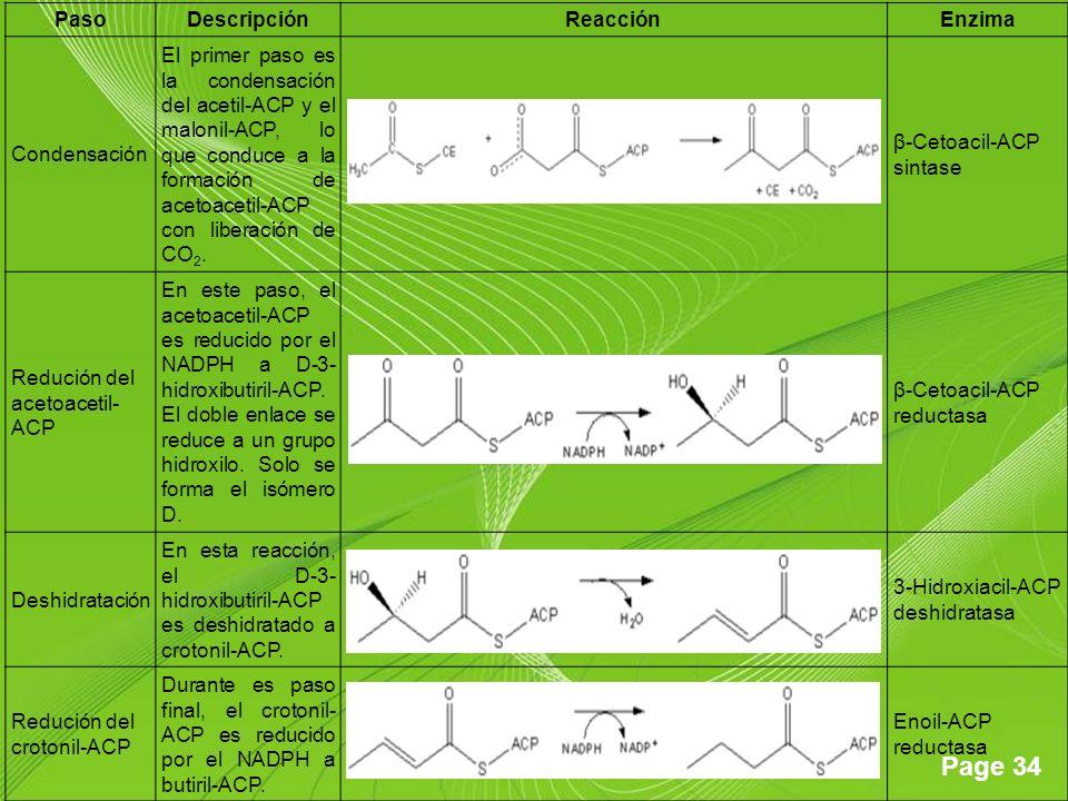 Page 34 PasoDescripciónReacciónEnzima Condensación El primer paso es la condensación del acetil-ACP y el malonil-ACP, lo que conduce a la formación de acetoacetil-ACP con liberación de CO 2.