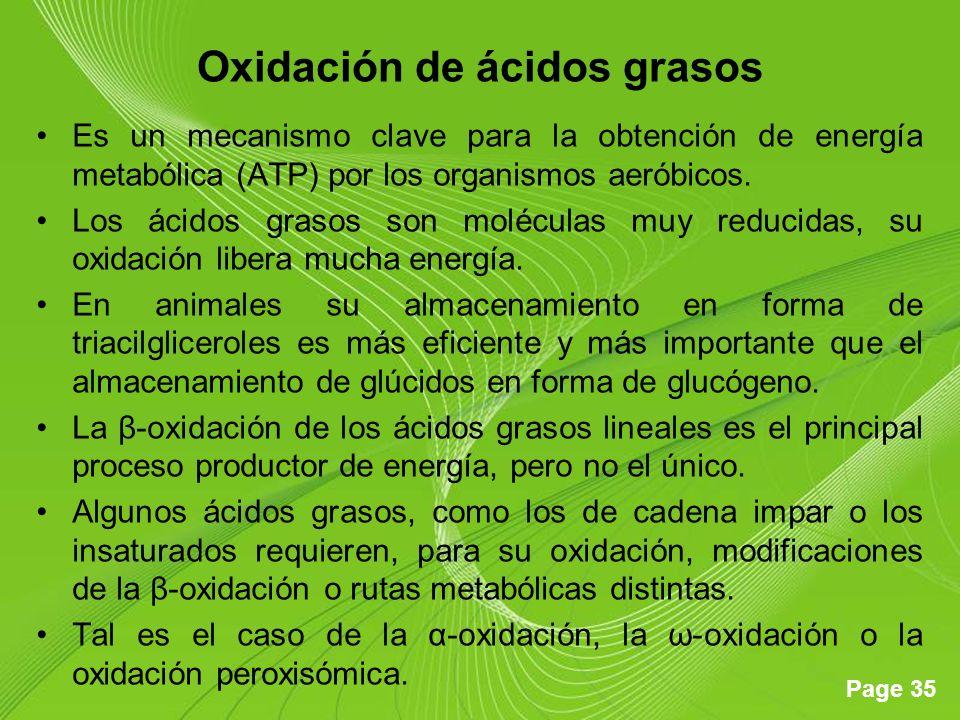 Page 35 Oxidación de ácidos grasos Es un mecanismo clave para la obtención de energía metabólica (ATP) por los organismos aeróbicos. Los ácidos grasos