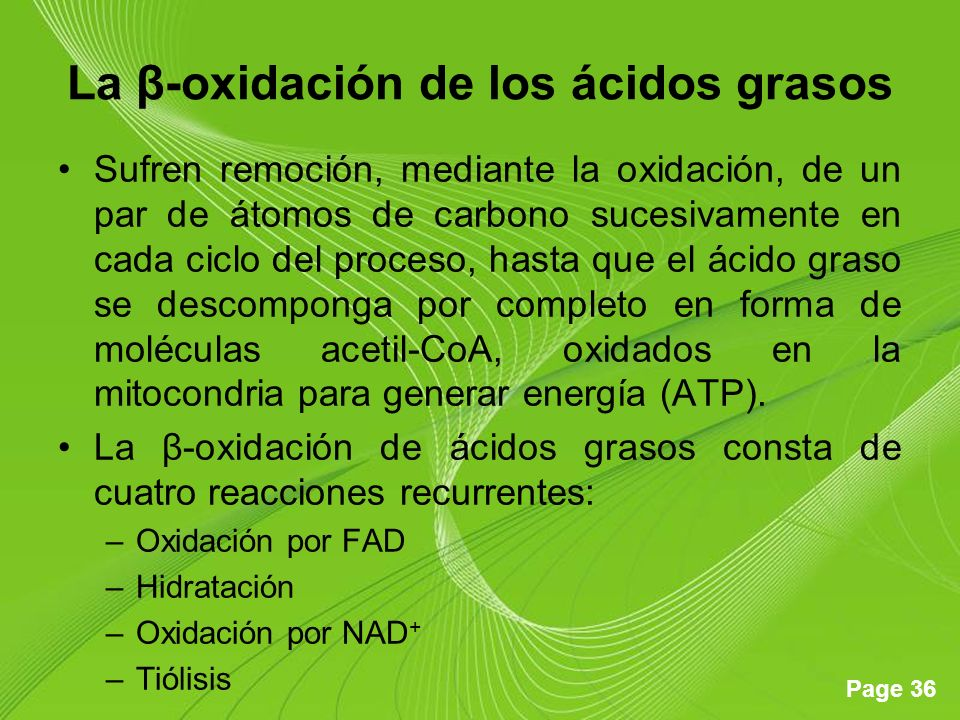 Page 36 La β-oxidación de los ácidos grasos Sufren remoción, mediante la oxidación, de un par de átomos de carbono sucesivamente en cada ciclo del proceso, hasta que el ácido graso se descomponga por completo en forma de moléculas acetil-CoA, oxidados en la mitocondria para generar energía (ATP).