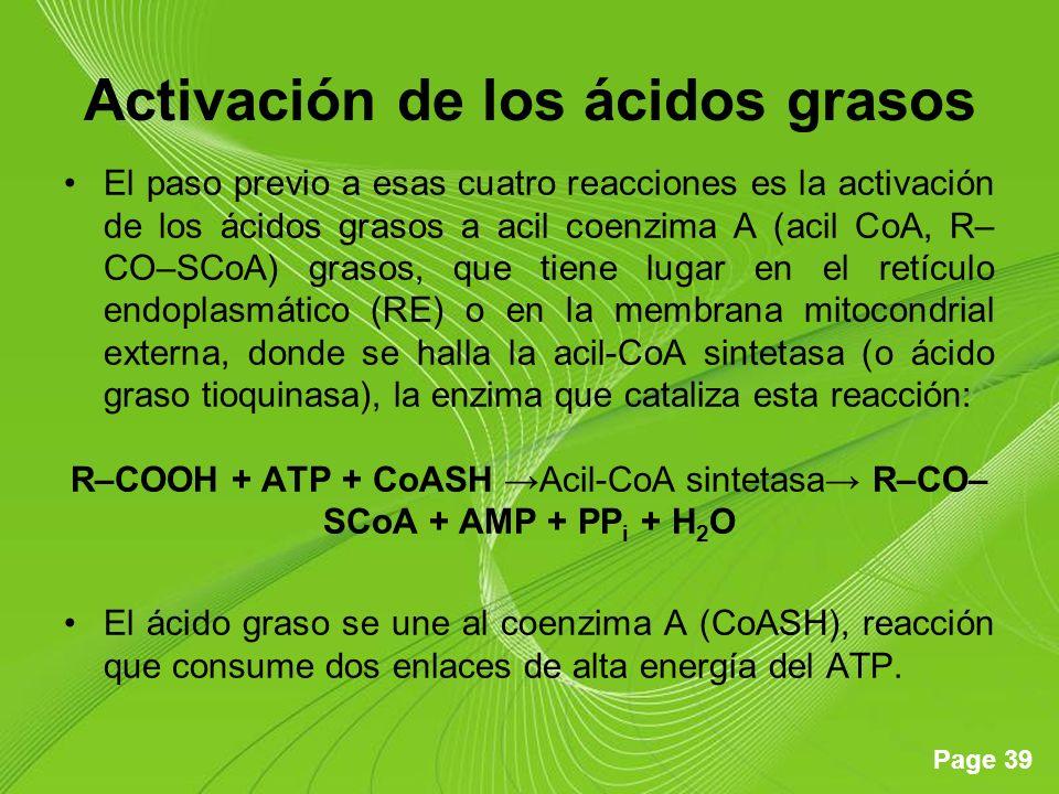 Page 39 Activación de los ácidos grasos El paso previo a esas cuatro reacciones es la activación de los ácidos grasos a acil coenzima A (acil CoA, R– CO–SCoA) grasos, que tiene lugar en el retículo endoplasmático (RE) o en la membrana mitocondrial externa, donde se halla la acil-CoA sintetasa (o ácido graso tioquinasa), la enzima que cataliza esta reacción: R–COOH + ATP + CoASH Acil-CoA sintetasa R–CO– SCoA + AMP + PP i + H 2 O El ácido graso se une al coenzima A (CoASH), reacción que consume dos enlaces de alta energía del ATP.