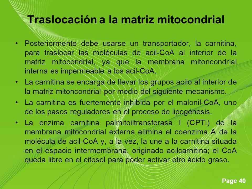 Page 40 Traslocación a la matriz mitocondrial Posteriormente debe usarse un transportador, la carnitina, para traslocar las moléculas de acil-CoA al interior de la matriz mitocondrial, ya que la membrana mitoncondrial interna es impermeable a los acil-CoA.