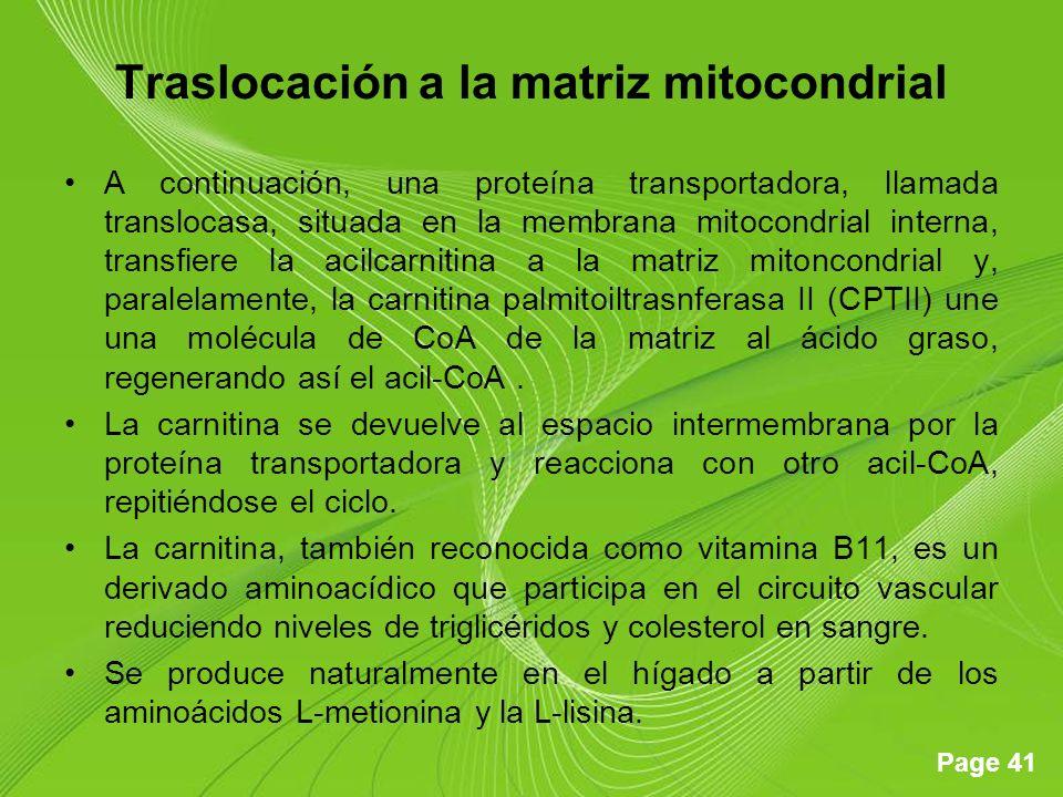 Page 41 Traslocación a la matriz mitocondrial A continuación, una proteína transportadora, llamada translocasa, situada en la membrana mitocondrial interna, transfiere la acilcarnitina a la matriz mitoncondrial y, paralelamente, la carnitina palmitoiltrasnferasa II (CPTII) une una molécula de CoA de la matriz al ácido graso, regenerando así el acil-CoA.