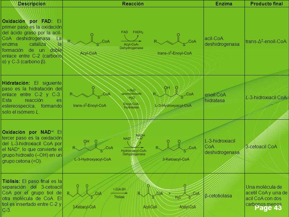 Page 43 DescripcionReacciónEnzimaProducto final Oxidación por FAD: El primer paso es la oxidación del ácido graso por la acil- CoA deshidrogenasa. La