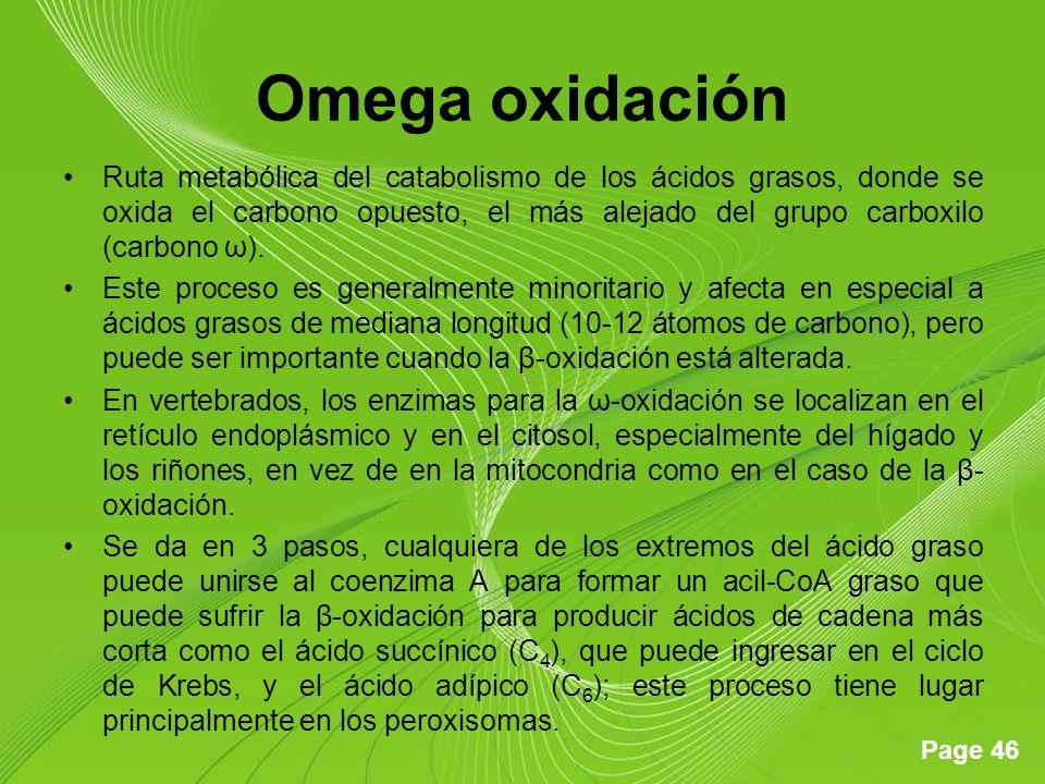 Page 46 Omega oxidación Ruta metabólica del catabolismo de los ácidos grasos, donde se oxida el carbono opuesto, el más alejado del grupo carboxilo (carbono ω).