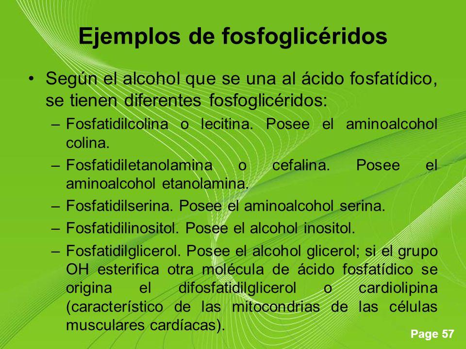 Page 57 Ejemplos de fosfoglicéridos Según el alcohol que se una al ácido fosfatídico, se tienen diferentes fosfoglicéridos: –Fosfatidilcolina o leciti