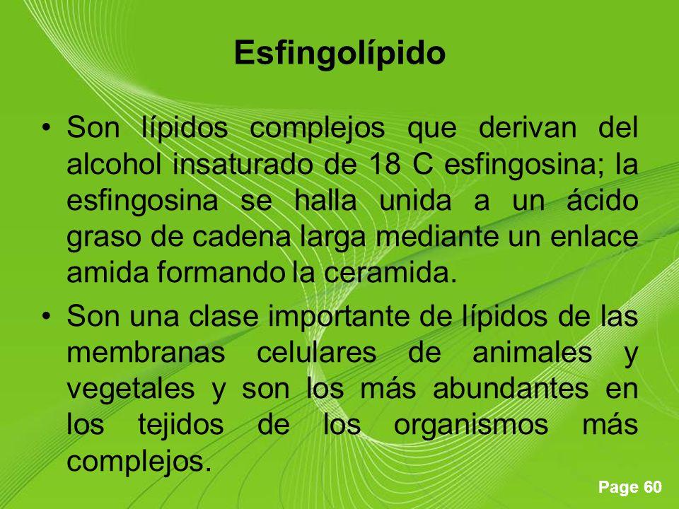 Page 60 Esfingolípido Son lípidos complejos que derivan del alcohol insaturado de 18 C esfingosina; la esfingosina se halla unida a un ácido graso de