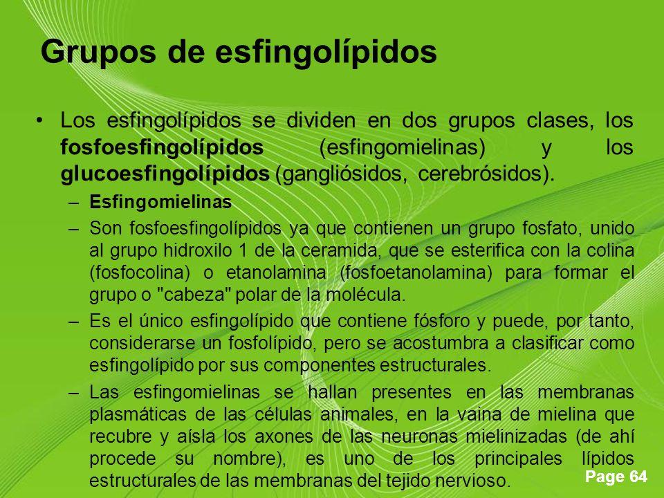 Page 64 Grupos de esfingolípidos Los esfingolípidos se dividen en dos grupos clases, los fosfoesfingolípidos (esfingomielinas) y los glucoesfingolípidos (gangliósidos, cerebrósidos).