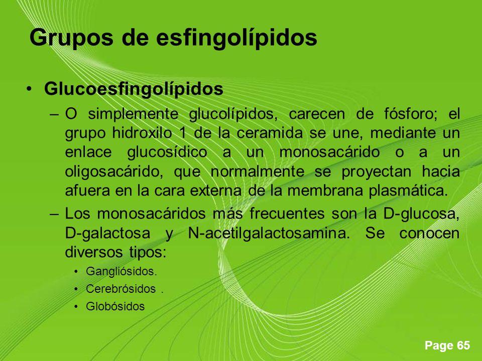 Page 65 Grupos de esfingolípidos Glucoesfingolípidos –O simplemente glucolípidos, carecen de fósforo; el grupo hidroxilo 1 de la ceramida se une, medi