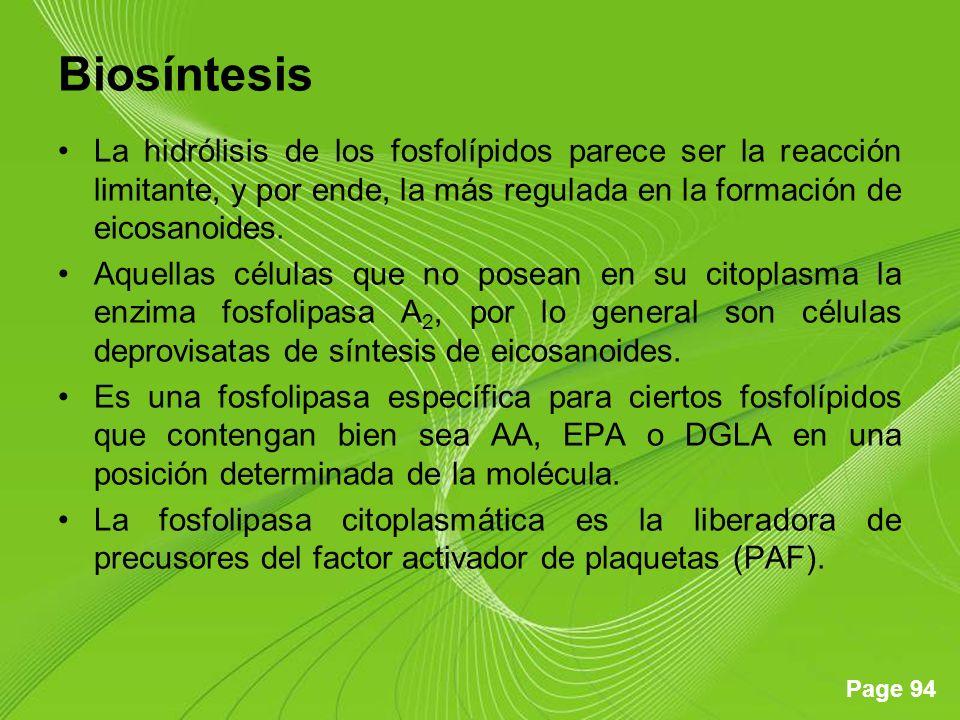 Page 94 Biosíntesis La hidrólisis de los fosfolípidos parece ser la reacción limitante, y por ende, la más regulada en la formación de eicosanoides. A
