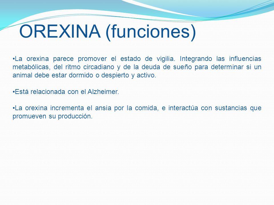 OREXINA (funciones) La orexina parece promover el estado de vigilia. Integrando las influencias metabólicas, del ritmo circadiano y de la deuda de sue
