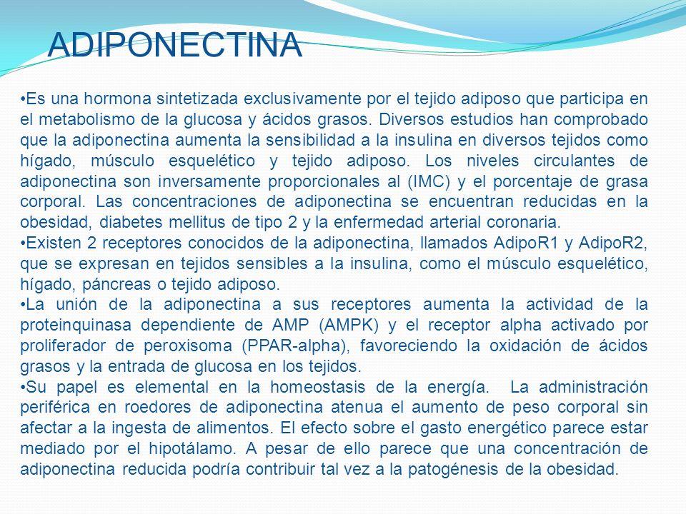 ADIPONECTINA Es una hormona sintetizada exclusivamente por el tejido adiposo que participa en el metabolismo de la glucosa y ácidos grasos. Diversos e