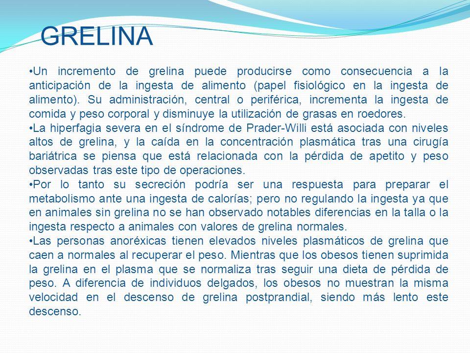 Un incremento de grelina puede producirse como consecuencia a la anticipación de la ingesta de alimento (papel fisiológico en la ingesta de alimento).