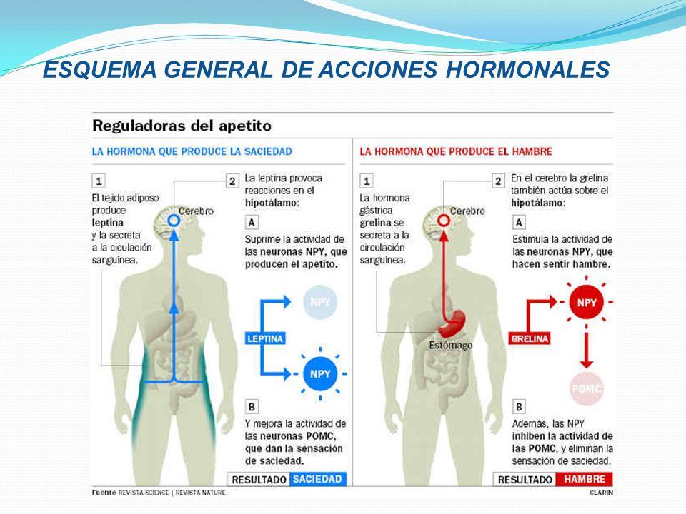 ESQUEMA GENERAL DE ACCIONES HORMONALES
